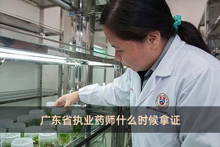广东省执业药师什么时候拿证